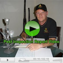 Termite Inspection Report Video