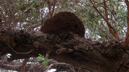 Termites in a tree