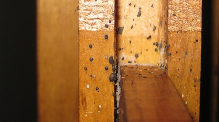 Bed Bugs And Bed Bug Pest Control Sydney