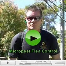 Fleas and Flea Control Video