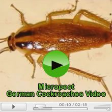 German Cockroaches and Cockroach Pest Control Video