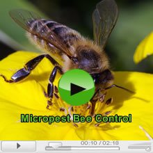 The Bees and Bee Pest Control in Sydney Video