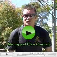 Fleas and Flea Control