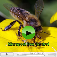 The Bees and Bee Pest Control in Sydney