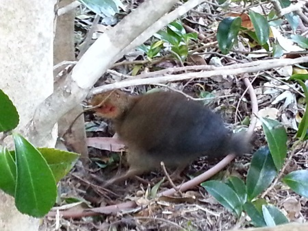 Baby Bush Turkey 450.jpg