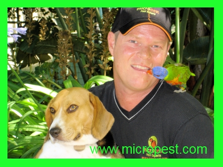 Bed bugs safe and pet friendly pest control