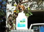 Cislin pest control spray and Rosey the dog